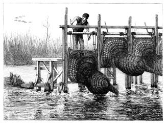 D9 lowering_eel_bucks_robertson_1876