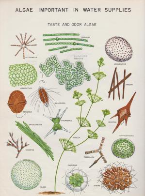 L8 Taste and Odour Algae 001 (2)